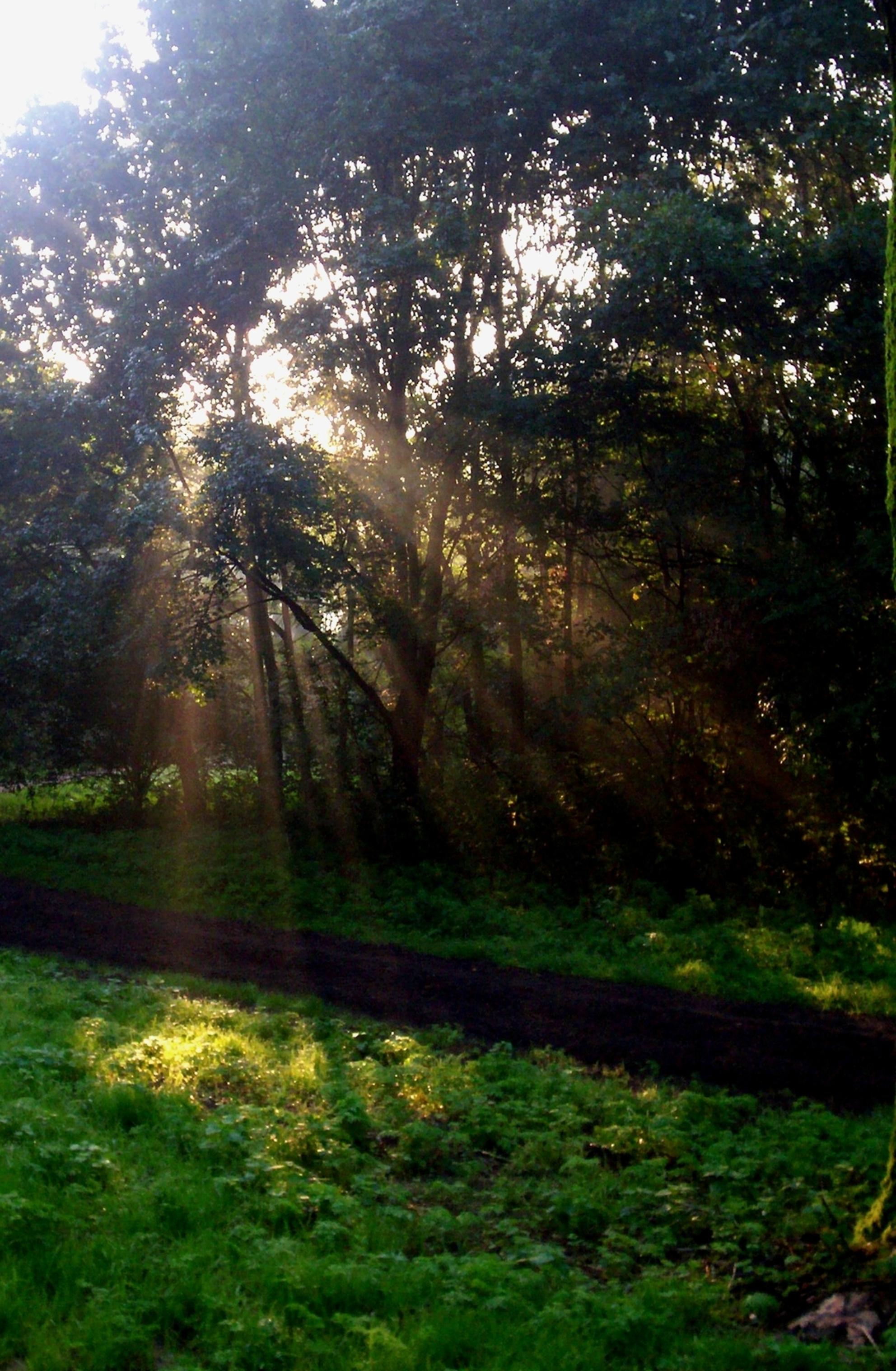 Golden rays - Wanneer het licht zo door de bomen komt in de ochtend... dan pas is het een mooie ochtend! - foto door CoonArt op 20-12-2018 - deze foto bevat: zon, lente, licht, landschap, zomer, voorjaar - Deze foto mag gebruikt worden in een Zoom.nl publicatie