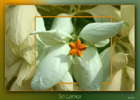 Sri Lanka Bloemen
