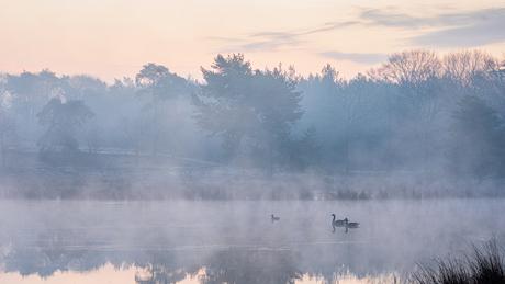 Morgensfeer