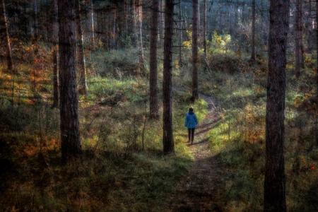 Boswandeling - - - foto door apadmos op 13-12-2018 - deze foto bevat: natuur, herfst, landschap, bos, tegenlicht, bomen, zeeland, schouwen, boswachterij, westenschouwen