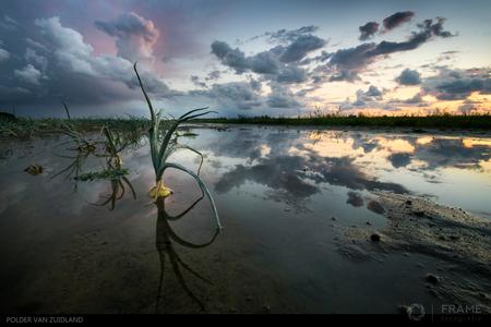 Verzuipende uien - En toen stonden, na de record droge zomer, de uien ineens met de voetjes in het water in de Polder van Zuidland - foto door framefotografie op 27-08-2018 - deze foto bevat: lucht, wolken, water, natuur, licht, avond, zonsondergang, spiegeling, landschap, tegenlicht, polder, uien
