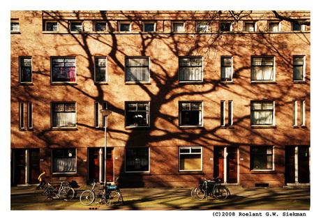 Schaduwboom in Stadslandschap