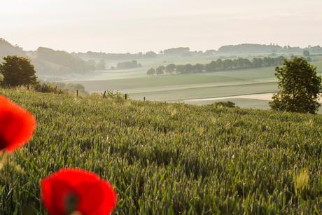 Limburgse velden in de mist