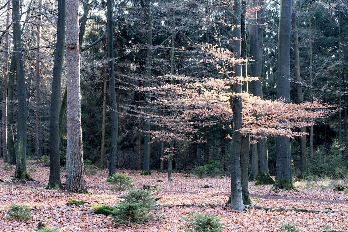 't Haagse Bos - Prachtig natuurgebied in de omgeving van Losser. - foto door Bendien op 03-03-2021 - deze foto bevat: natuur, landschap, bos, bomen