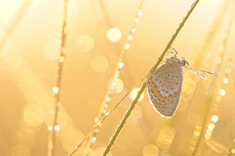 Een gouden morgen