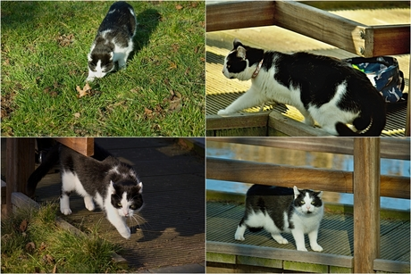 Kat op jacht in park Esterveld