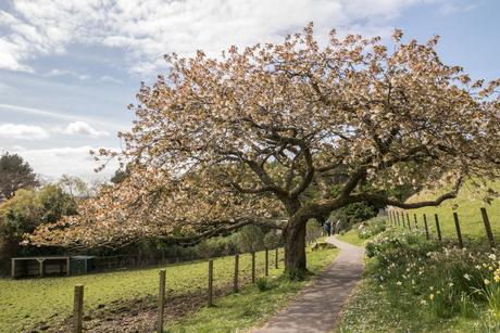 'Arduaine Gardens' in Schotland