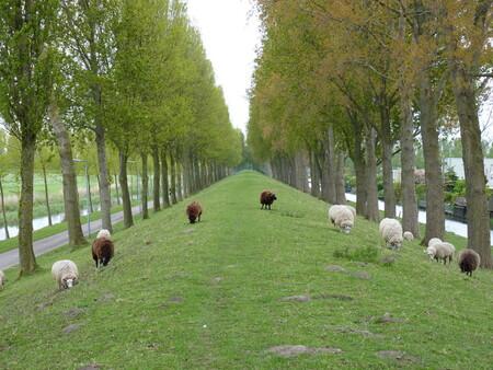 schapen staan weer buiten - schapen die worden weer het land op gelaten, en dan krijg je van dit soort foto's - foto door daan3 op 09-05-2010 - deze foto bevat: schapen