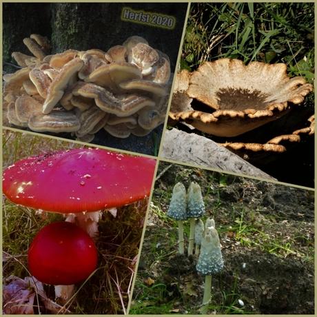Bijzondere paddenstoelen