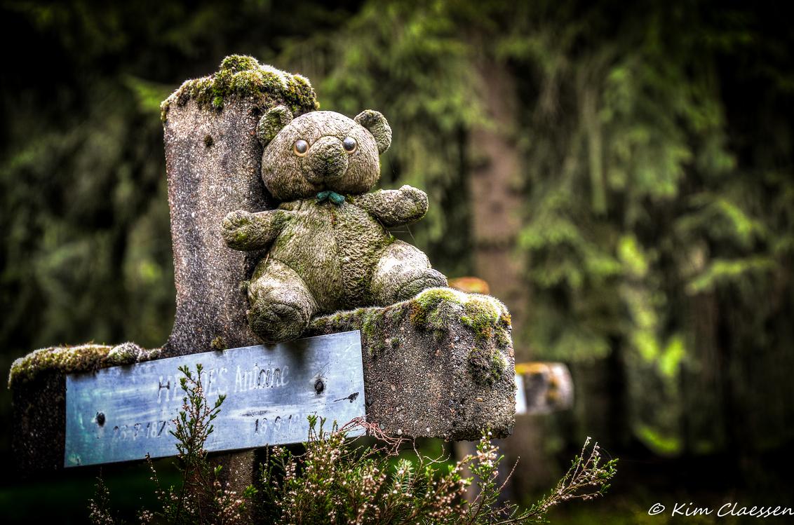 Eenzaam beertje - Vandaag voor het eerst een bezoekje gebracht aan 'Cemetery of the insane'. Dit is een HDR foto, waarbij ik 3 identieke foto's met verschillende belic - foto door KC78 op 27-04-2015 - deze foto bevat: natuur, landschap, graven, kerkhof, bewerking, graf, beer, begraafplaats, knuffel, belgie, vervallen, hdr, urbex, tonemapping, ue, urban exploration, photomatrix, Cemetery of the Insane