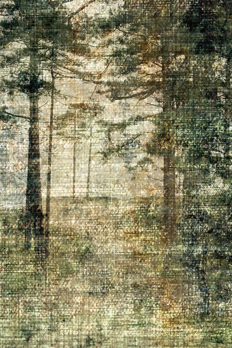 Verdwaald tussen bomen. - . - foto door Zienderogen-foto op 06-12-2016 - deze foto bevat: landschap