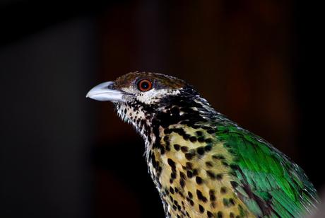 Vogel in Burgers Zoo
