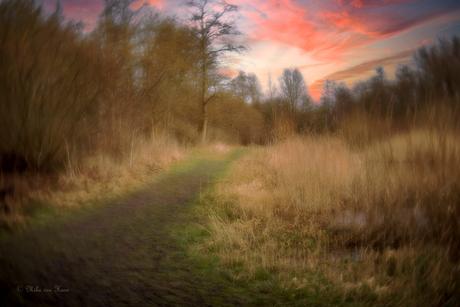 Wegdromen in het bos