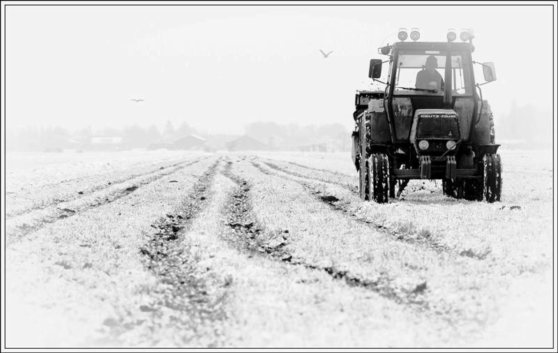 Geharde boer... - Sneeuw en kou, voor de boer maakt het niet uit. Deze week reed hij  met de tractor op z'n land. Vond het wel een leuk gezicht met die banen die hij  - foto door Foto_Marleen op 06-02-2009 - deze foto bevat: land, platte, tractor, boer, aarde, foto-marleen