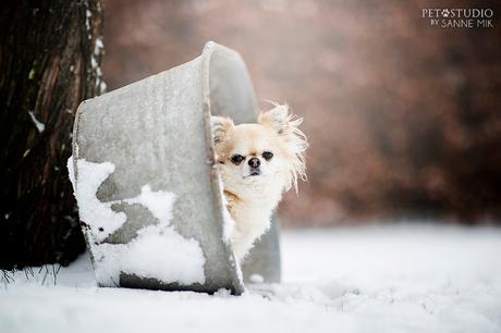 Snowy Mr. Sam