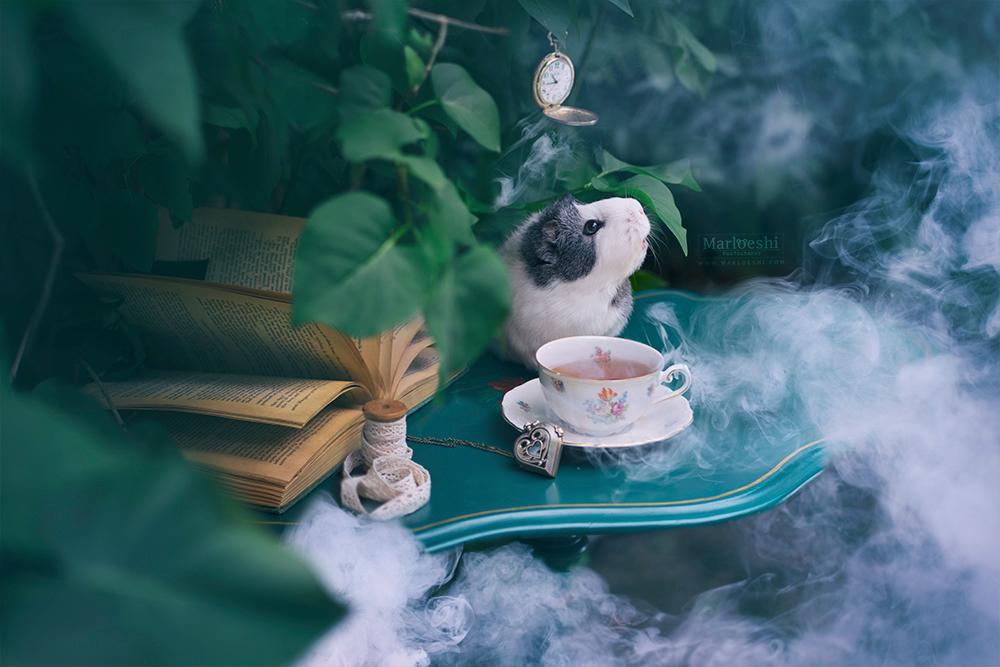 Oh no! - - - foto door marloeshi op 17-06-2016 - deze foto bevat: groen, tafel, zakhorloge, huisdier, dier, rook, cavia, boeken, dof, 35mm, theekopje, mieps
