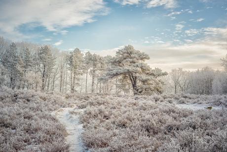 Breeze of frost (1 van 1)