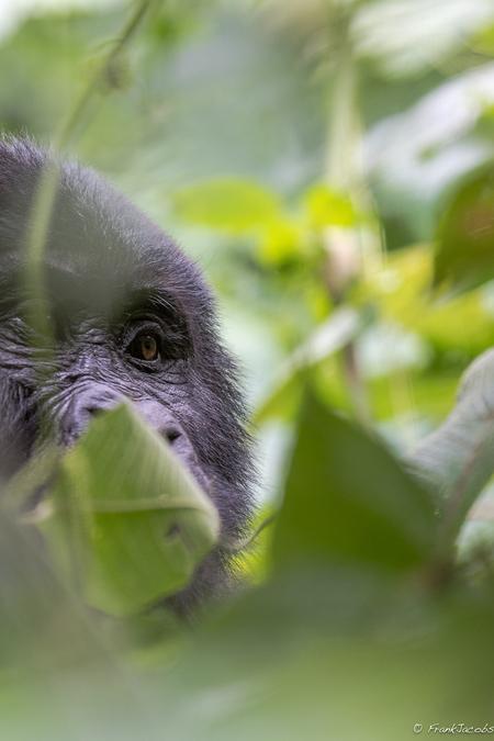 STOP!!! - Tonnen bushmeat worden illegaal via Zaventem België binnengeloodsd. Welke politieker gaat hier iets aan doen. DIT MOET STOPPEN!!!! - foto door frankjacobs op 10-10-2018 - deze foto bevat: natuur, dieren, safari, olifant, aap, roofvogel, afrika, wildlife