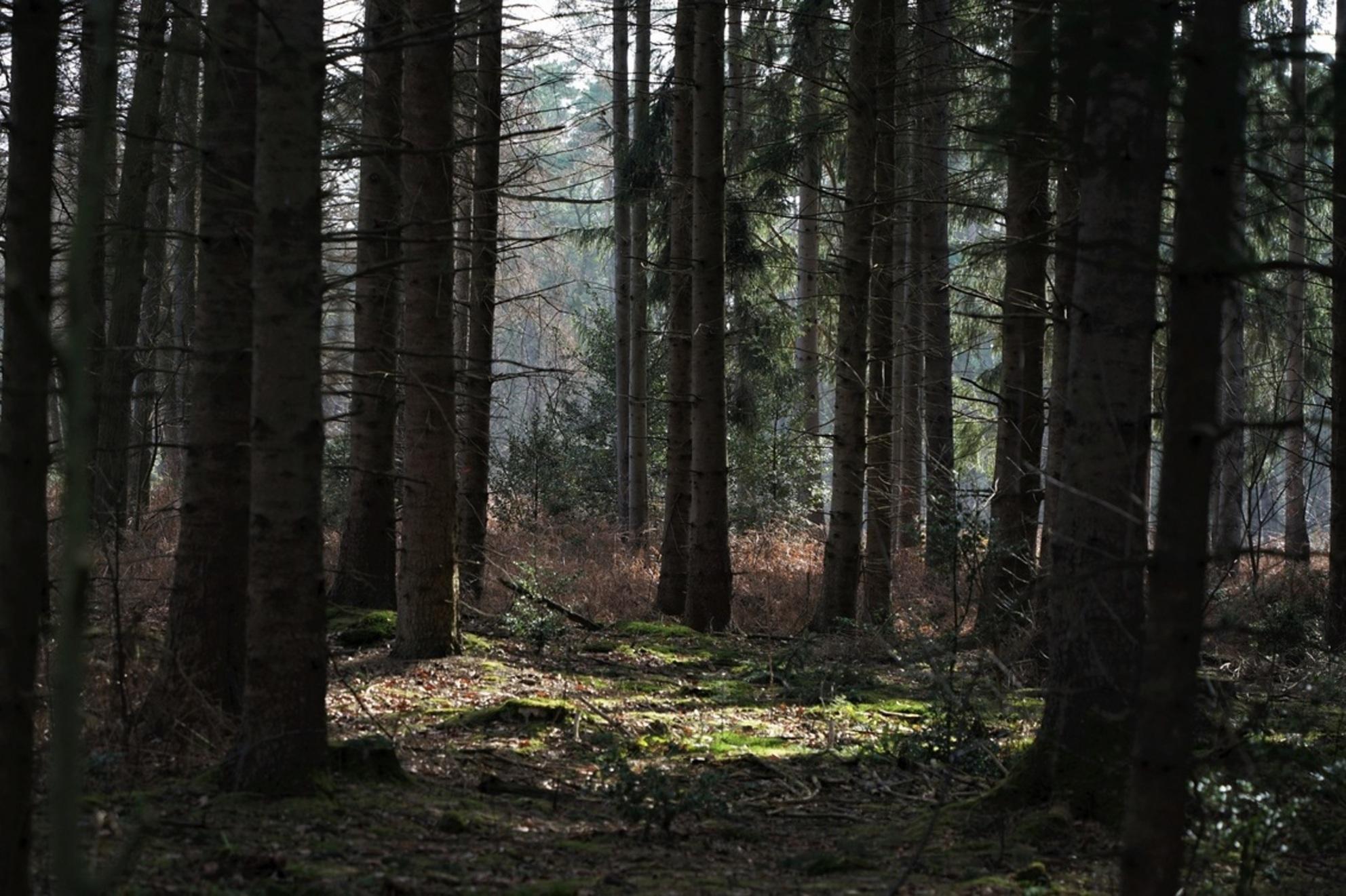 bomen - lichtplek in het bos.... - foto door jh- op 03-03-2021 - deze foto bevat: winter, landschap, schaduw, bos, bomen