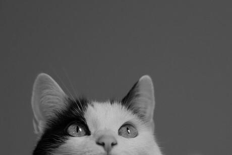 Nieuwsgierige Luna