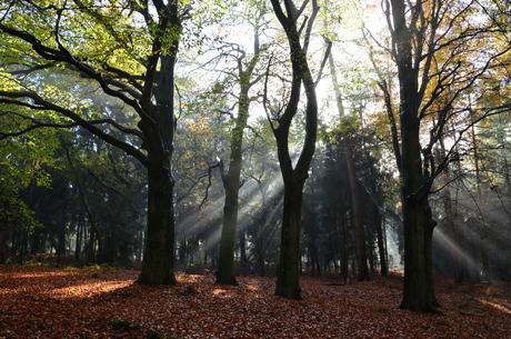 het mooie bos in de herfst