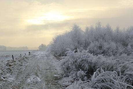 Winterdag met ruige rijp