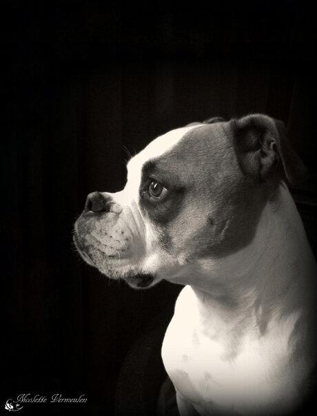 Mike, Amerikaanse bulldog