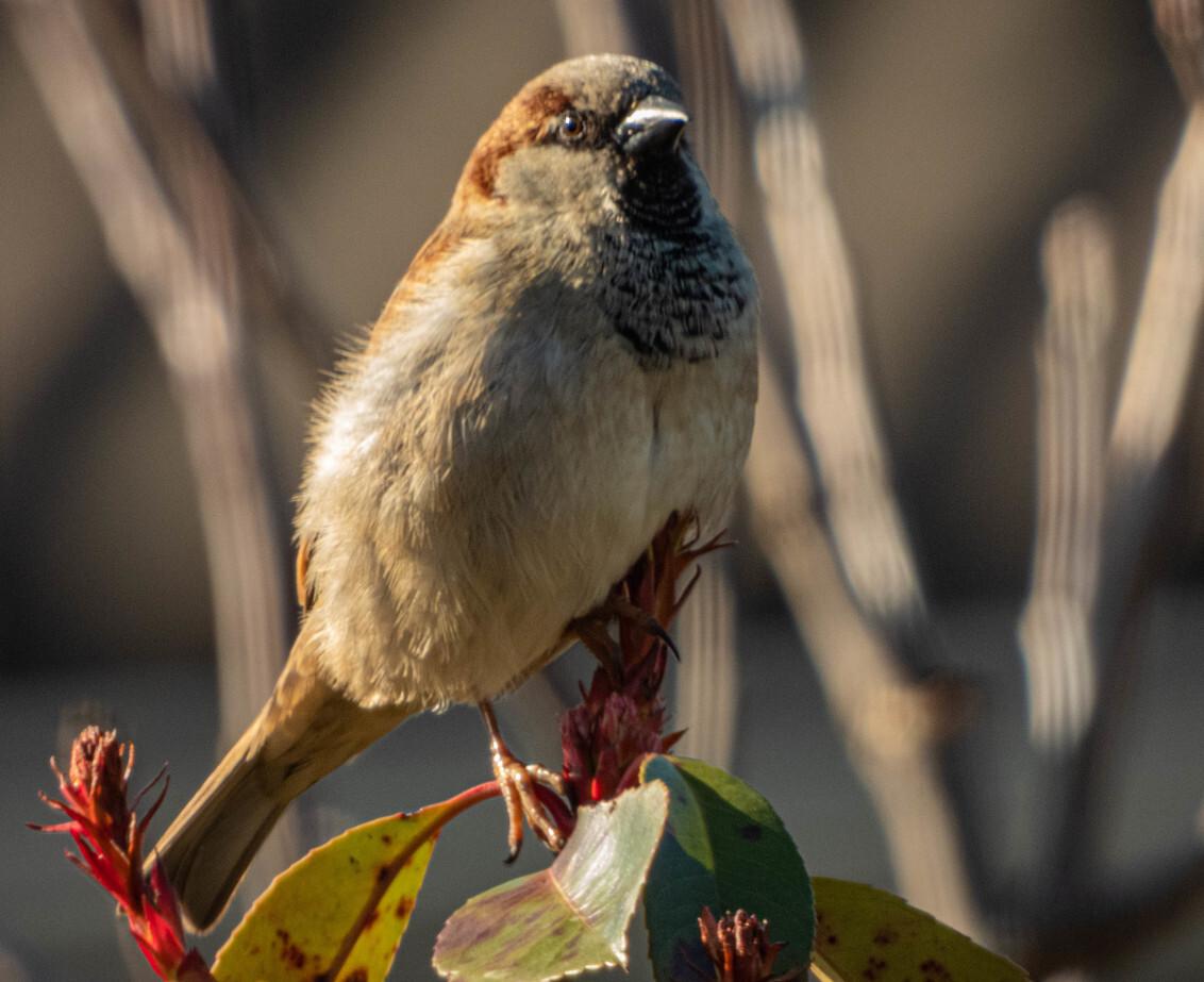 Tuinvogel - - - foto door TyoMoore op 02-03-2021 - deze foto bevat: tuin, vogel, tak