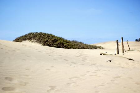 And the living is easy.... - Zandduinen... - foto door nellekegb op 19-05-2013 - deze foto bevat: nature, natuur, duinen, zand, dunes, sand