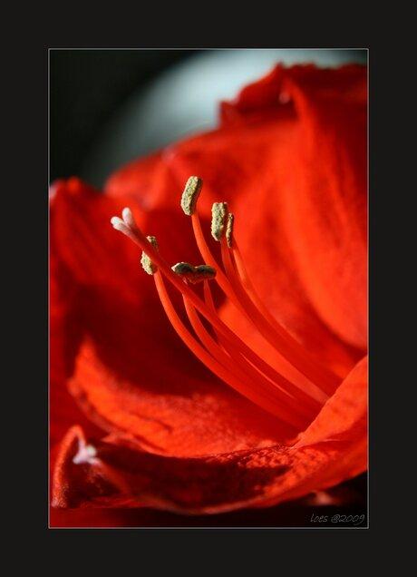 bloom...