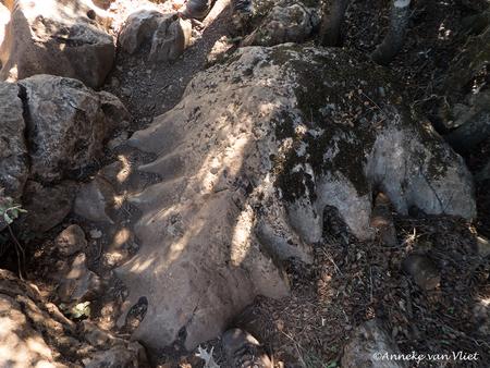 El Torcal blad - Deze steen tussen de struiken gescoord in El Torcal. Het heeft de vorm van een blad, maar hoe het ontstaan is?  Fijn de reacties op mijn foto's. - foto door AnnekevanVliet op 29-11-2017