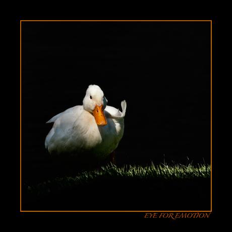 Duck in the dark...