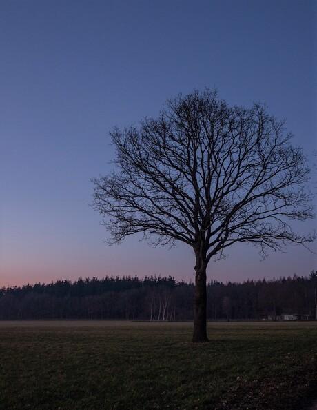 Blauwe uur in Drenthe