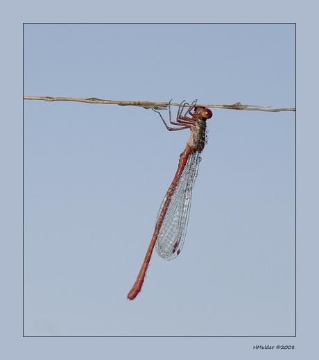 Hanging on!