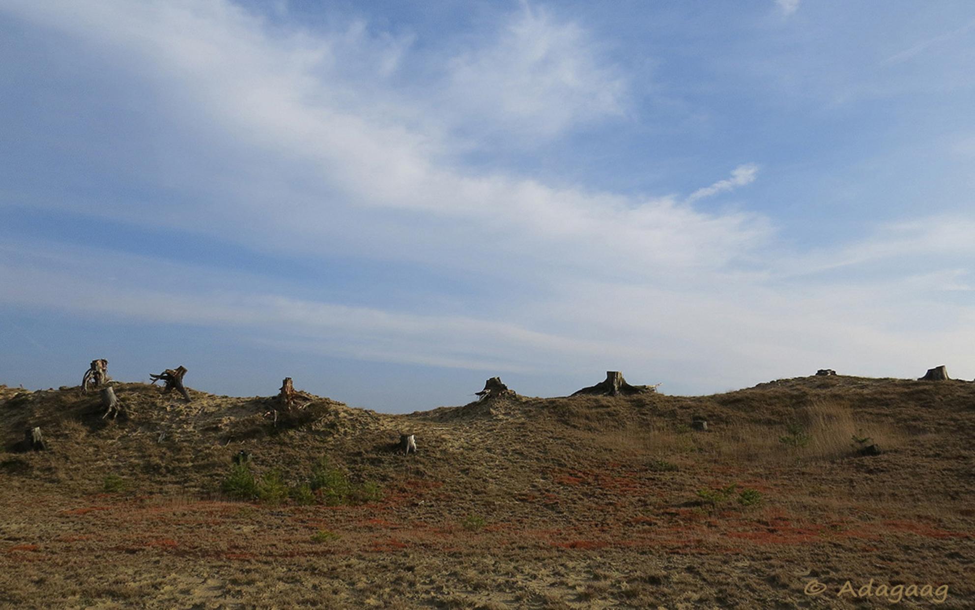 Kaal landschap - - - foto door adagaag op 11-03-2015 - deze foto bevat: natuur, mos, winter, landschap, heide, duinen, bomen, zand, boomstronk
