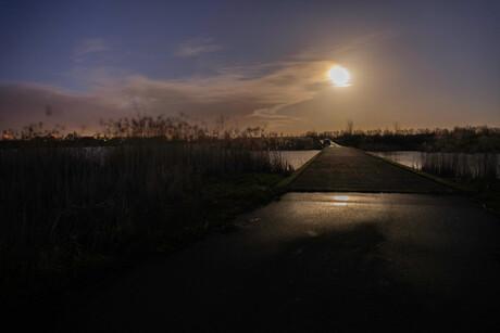Manenschijn in de Biesbosch