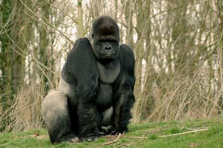Kong!!