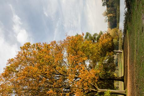 Herfst in Surea 2