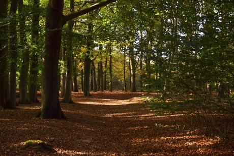 Herfst 1.jpg