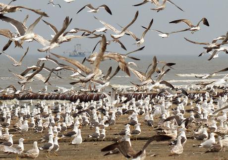 Boat between Birds