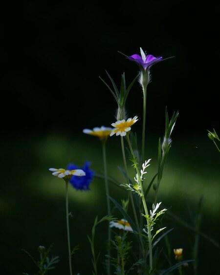 Wildebloemen - - - foto door ArtEKPhotography op 25-06-2020 - deze foto bevat: groen, macro, zon, bloem, natuur, geel, licht, tuin, tegenlicht, zomer, nederland, wildebloemen