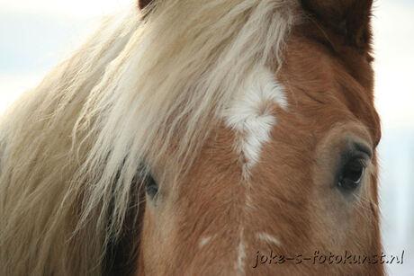 Detailfoto paard