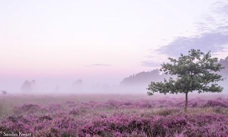 Misty Morning - Veluwe, Holland