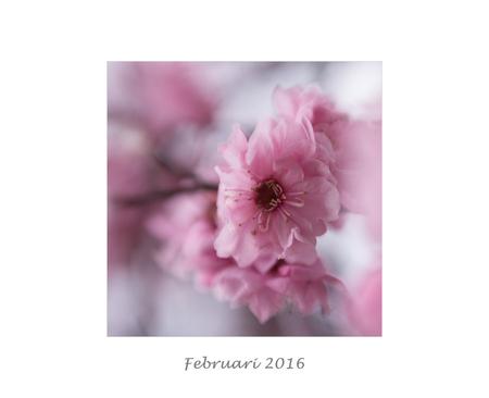 Februari 2016 - Jaaroverzicht 2016 Februari - foto door nicole-8 op 31-12-2016 - deze foto bevat: roze, macro, wit, bloem, lente, natuur, roos, licht, tuin, bokeh, jaaroverzicht