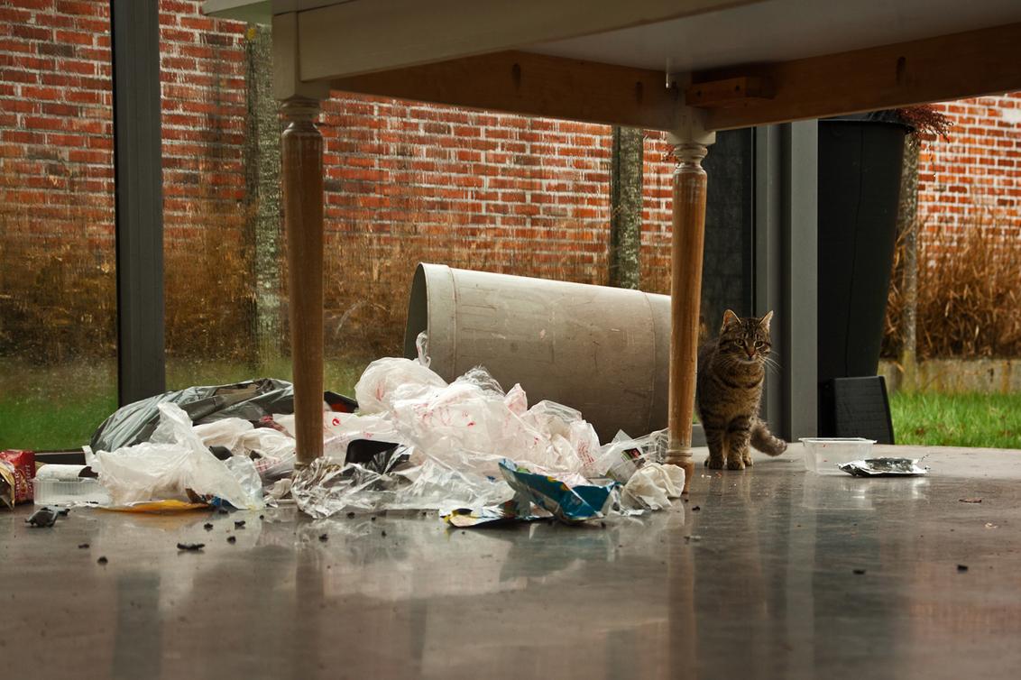 Ramkraak - Ik?... nee, hoe kom je erbij? - foto door kosmopol op 17-04-2012 - deze foto bevat: poes, kat, vuilnis, kosmopol