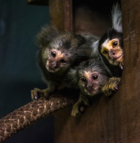 three little, tiny monkeys