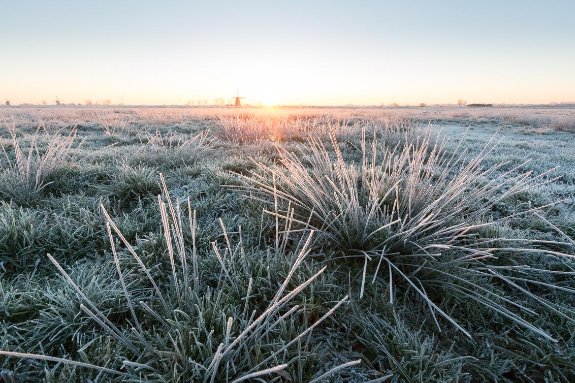 Rijp - Voor Transcontinenta (de officiële importeur van Tamron in Nederland) was ik gevraagd of ik een lens review wilde doen van de Tamron 10-24MM F/3.5-4. - foto door Martijnvandernat op 28-01-2019 - deze foto bevat: natuur, rijp, winter, landschap, tegenlicht, zonsopkomst, molen, polder, koude, munnikenpolder, meerburgermolen