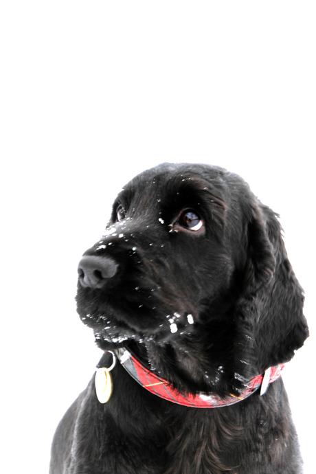 Koud in de sneeuw