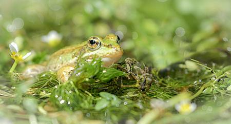 50 tinten groen kikker - 50 tinten groen kikker - foto door BrendaCaJo op 30-12-2018 - deze foto bevat: groen, zon, kikker, water, natuur, tuin, vijver, zomer, reptielen