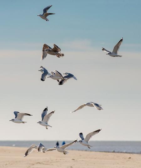 Meeuwen - Twee weken geleden een weekendje naar de zee geweest toen het nog koud was, maar wel een zonnetje scheen :) - foto door corinnec op 25-02-2021 - deze foto bevat: strand, zee, water, meeuw, natuur, winter, dieren, watervogel
